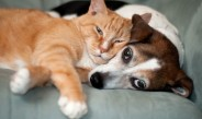Pets_dog_and_cat