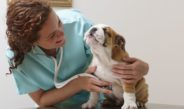 Dog_respiratory_exemined_by_veterinarian